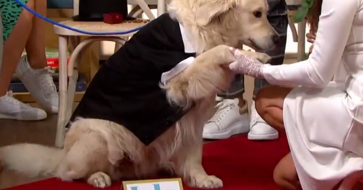 After 221 Dates Don't Lead to Love, Woman Marries Her Dog